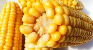 kukorica glikémiás index 55